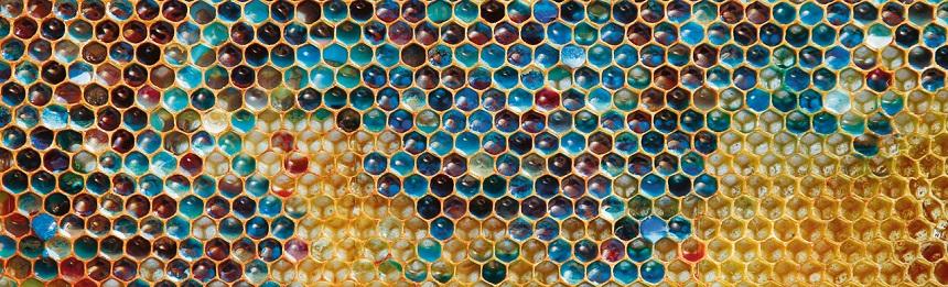 Le monde vu par les abeilles, rencontre avec Martin Giurfa du CRCA.