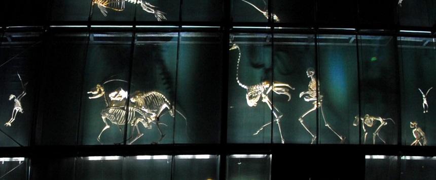 """Le Museum de Toulouse a 150 ans ! Rencontre avec un """"Savanturier""""…"""